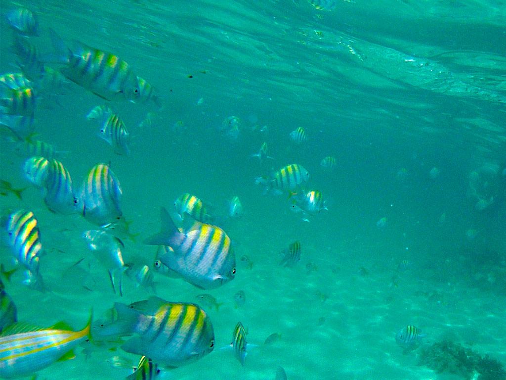 arrecife coral porto de galinhas