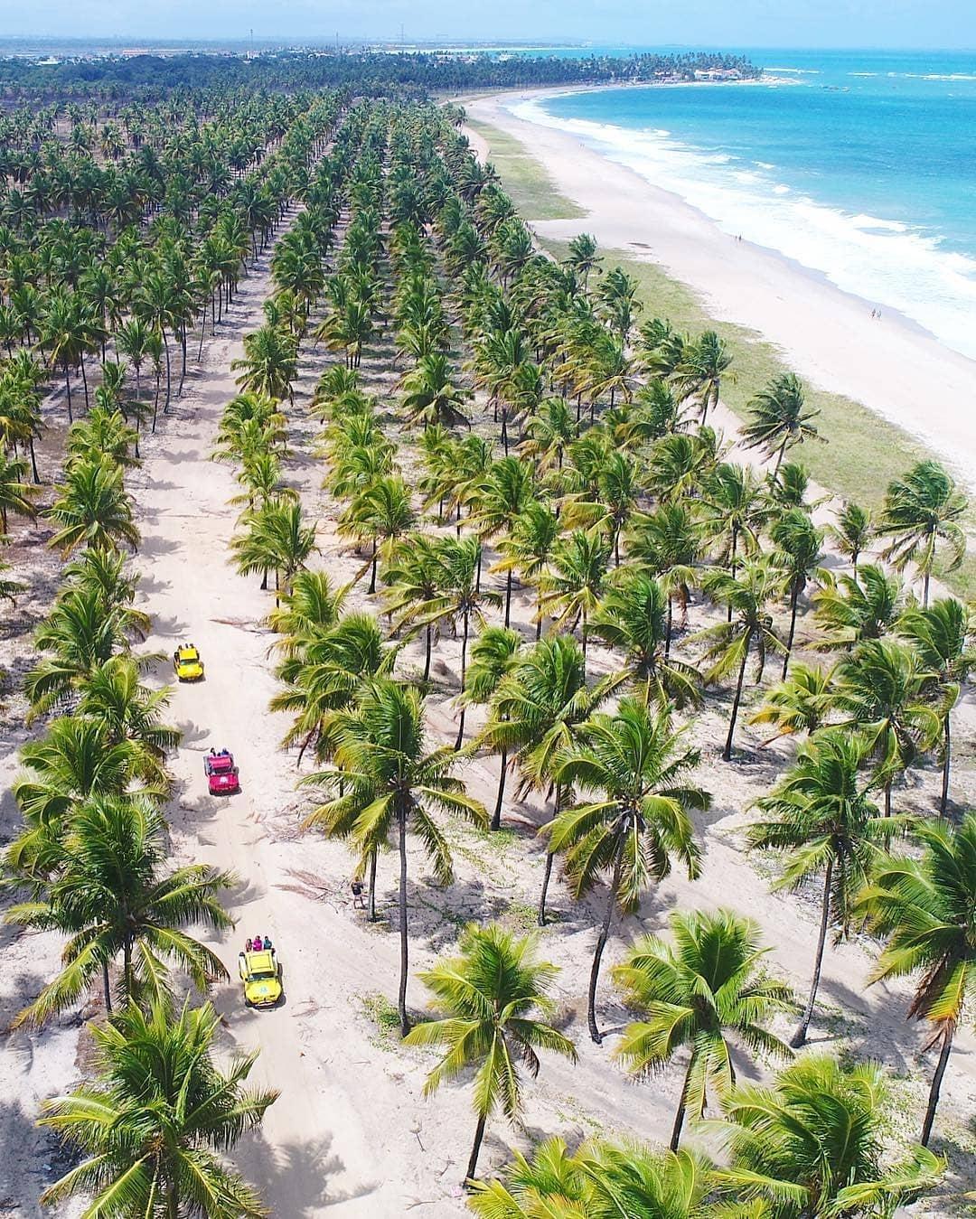 Coqueral playa de Maracaípe